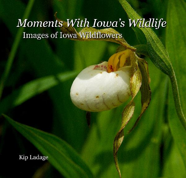 Moments With Iowa's Wildlife - Images of Iowa Wildflowers