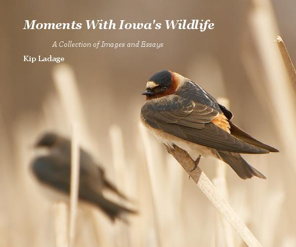 Moments With Iowa's Wildlife - A Collection of Images and Essays