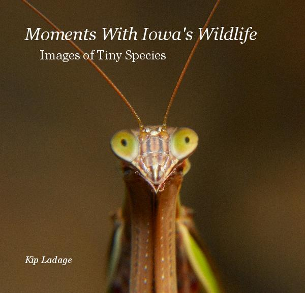 Moments With Iowa's Wildlife - Images of Tiny Species