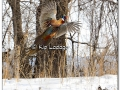 ring-necked-pheasant-297934