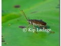 aquatic-insect-on-lily-pad-88490