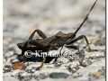 armored-insect-on-trail-69081