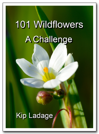101 Wildflowers - A Challenge Cover for WP ds