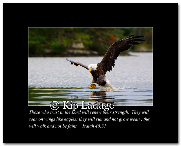 Bald Eagle With Verse