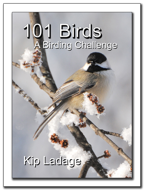 Bird Book Cover at 450 with ds
