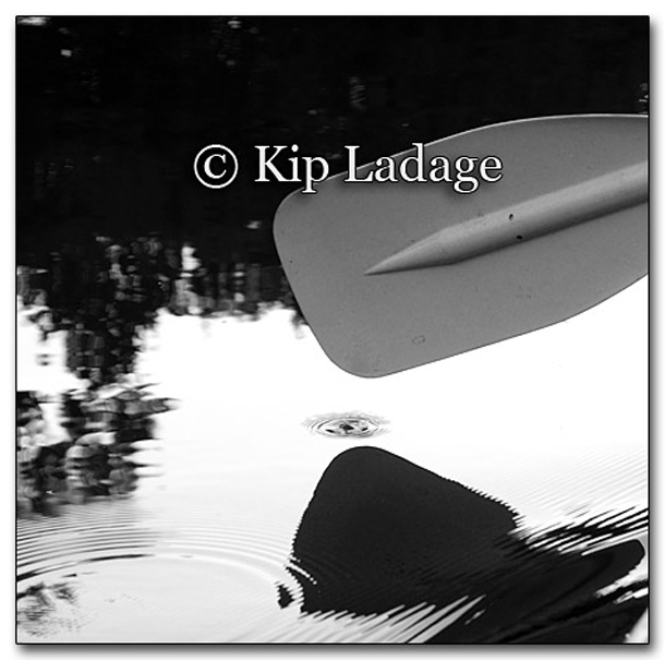 Paddle in the Water - Image 220704