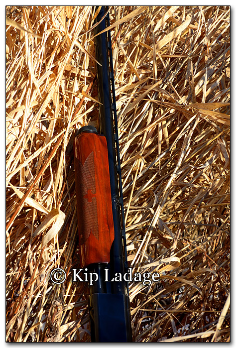 Remington Shotgun in Grass - Image 234336