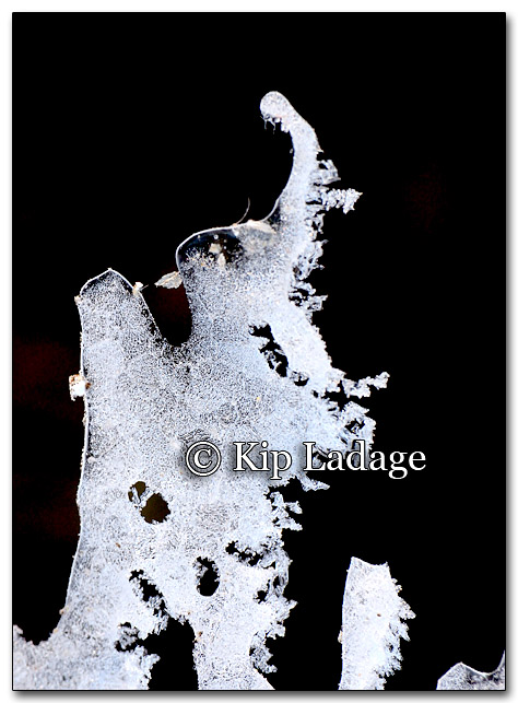 Ice Frost Pattern - Image 239261