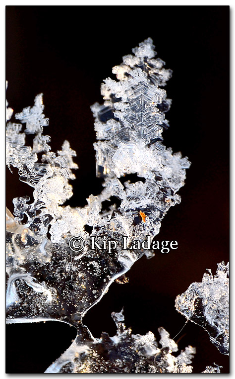 Ice Frost Pattern - Image 239264