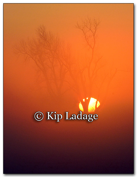 Sunrise and Fog - Image 239016