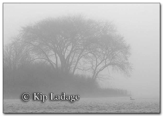 Foggy Sweet Marsh - Image 248275