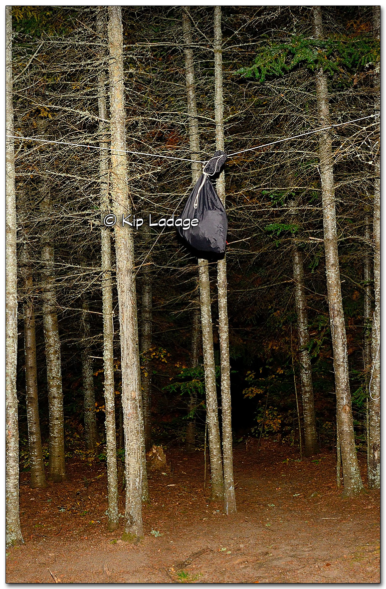 Bear Bag Hung in Tree - BWCA - Wood Lake Trip - Image 283345