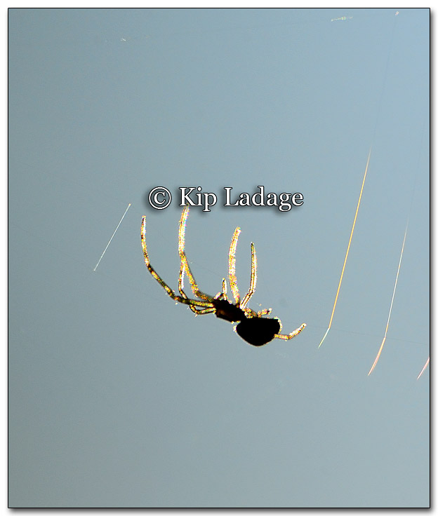 Spider in Web - Image 281983