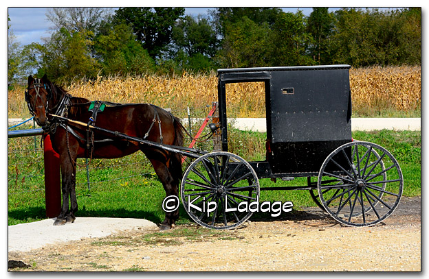 Amish Horse and Buggy - Image 285180