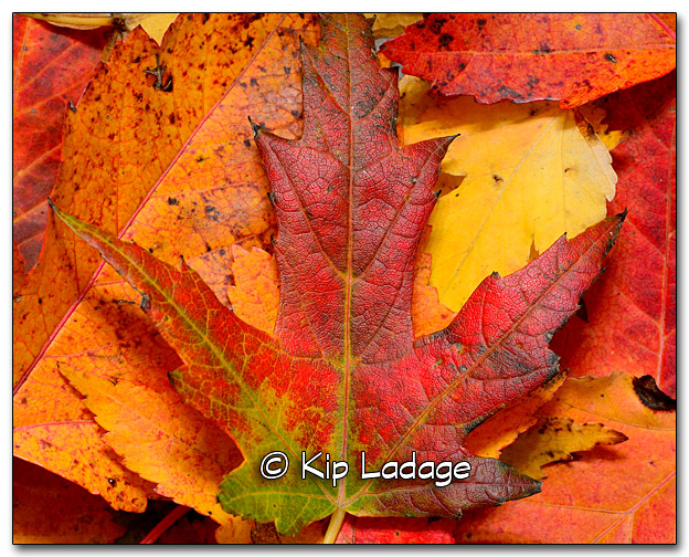 Autumn Leaves - Image 285775