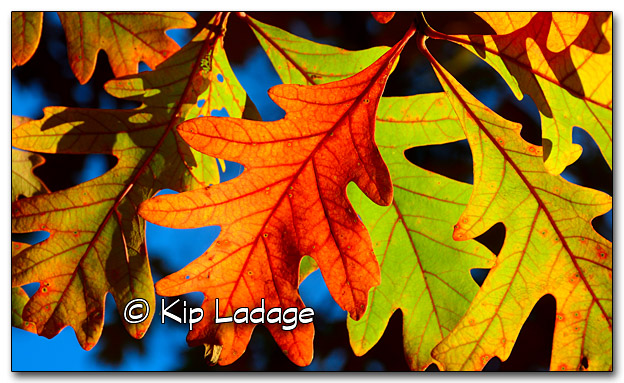Autumn Leaves - Image 285923