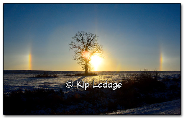 Oak Tree and Sundogs - Image 288305