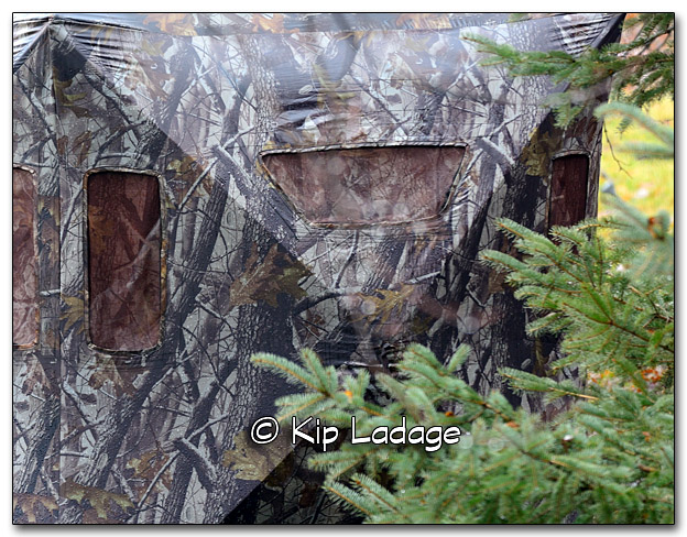 Bird Blind in Rain - Image 291135