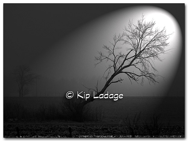 Tree in Fog - Image 296591