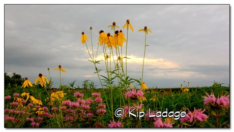Wildflowers and Storm Clouds - Image 332075
