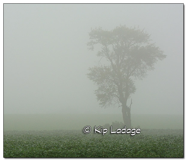 Tree in Fog - Image 336443