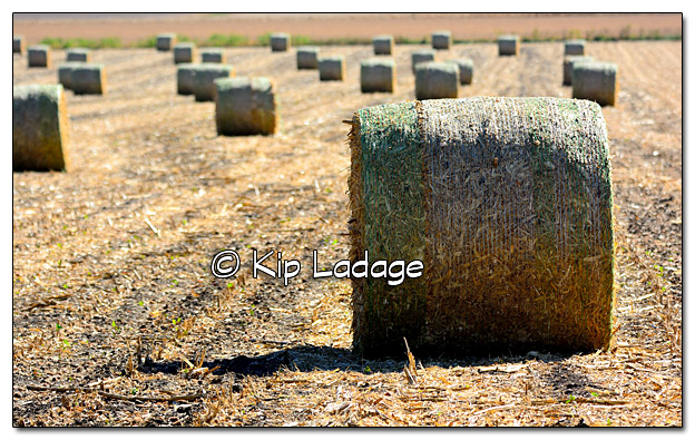 Cornstalk Bales in Field - Image 340606