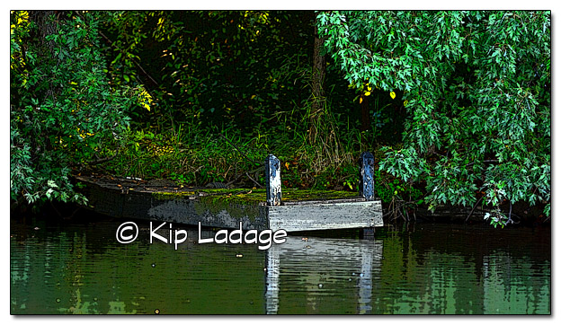 Rustic Wood Dock On Wapsipinicon River (Posterized) - Image 337965