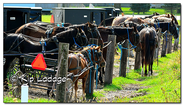 Amish Parking Lot - Image 341377