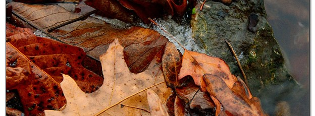 Autumn Leaves in Rain - Image 346375