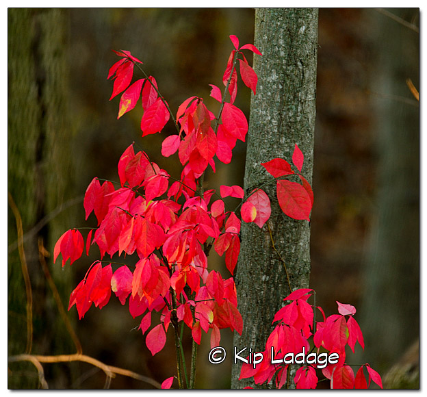Pink Leaves of Autumn - Image 346461