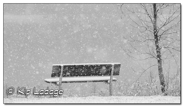 Bench in Snow at George Wyth State Park (mono) - Image 349109
