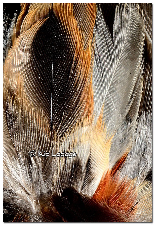 Sparrow Feather - Image 351069