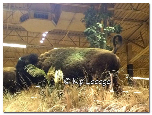 Buffalo Mount at Bass Pro Shop