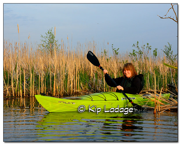 Mother's Day Marsh Migrations Paddler - Image 378708