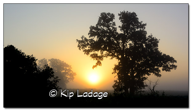 Foggy Sunrise - Image 339382
