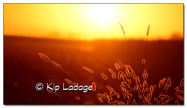 Sunrise in Farm Country - Image 400413