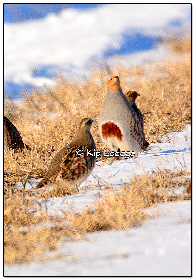 Gray Partridge - Image 413192 (cropped)