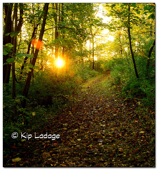 Trail at Hickory Hills Park at Sunrise - Image 468713 (© Kip Ladage)