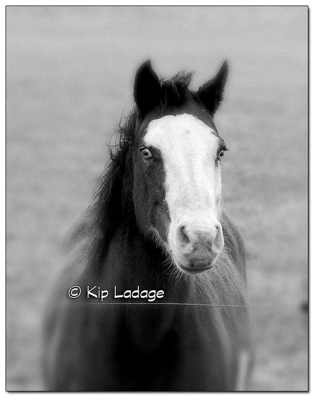 Horse in Drizzle - Image 473011 edited (© Kip Ladage)