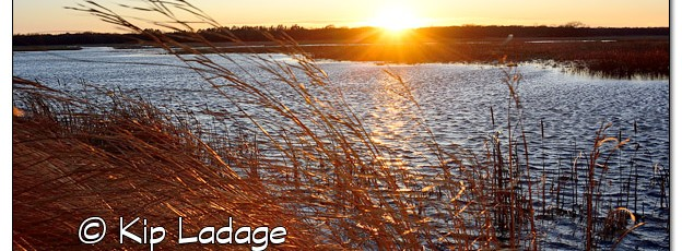 Sweet Marsh Sunset - Image 478735 (© Kip Ladage)