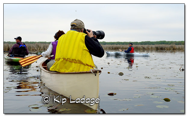 Mother's Day Marsh Migrations at Sweet Marsh - Image 504674 (© Kip Ladage)