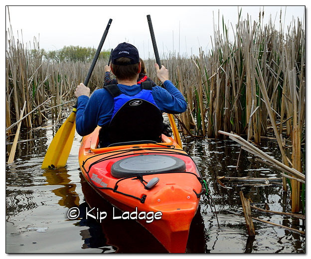 Mother's Day Marsh Migrations at Sweet Marsh - Image 504688 (© Kip Ladage)