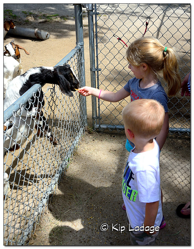 Emerson Feeding Goat at Sunrise Petting Zoo - Image DSC_42556 (© Kip Ladage)