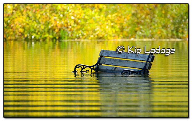 Park Bench Under Water - Image 523856 (© Kip Ladage)