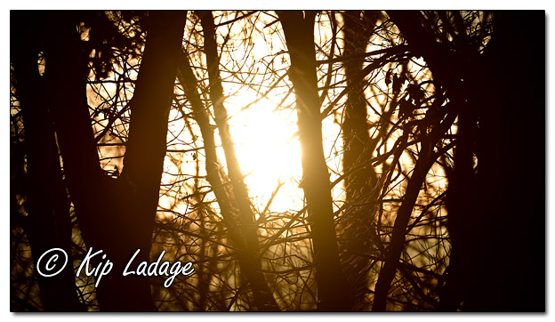 Sunset Through Trees - Image 540963 © Kip Ladage)