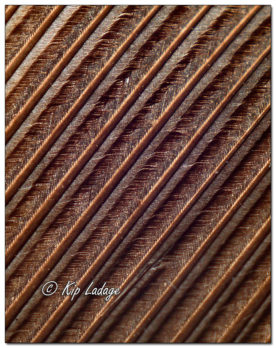 Macro - Turkey Feather - Image 591518 cropped vertical (© Kip Ladage)