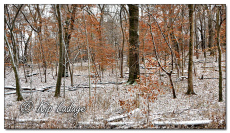 Babcock Woods with Snow - Image 599956 (© Kip Ladage)