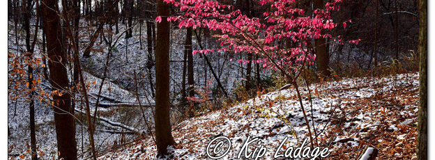 Pink Tree and Trail at Hartman Reserve - Image 597079 (© Kip Ladage)