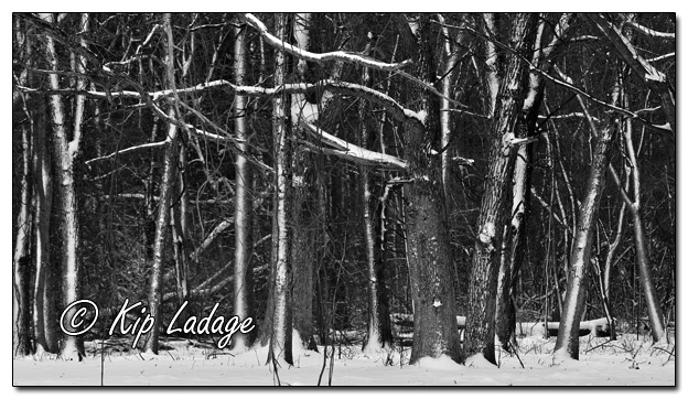 Snow on Tree Patterns - Image 604407 - mono (© Kip Ladage)