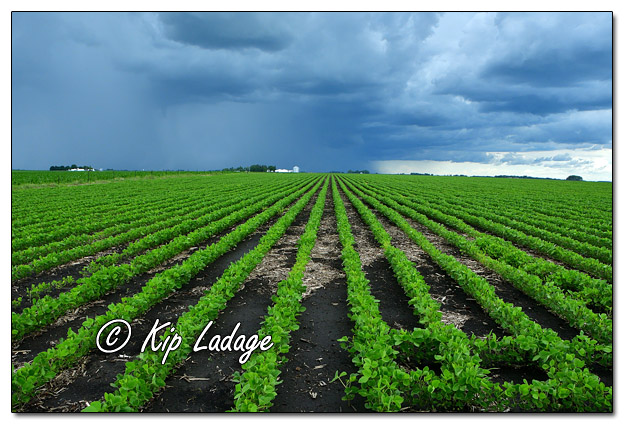 Thunderstorm Over Rural Iowa Landscape - Image 640096 (© Kip Ladage)